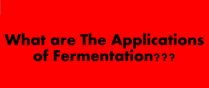 Applications of fermentation in biotechnology