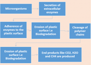 Enzymes involved in Plastic Degradation