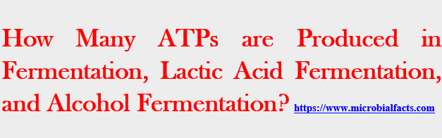 How Many ATPs are Produced in Fermentation, Lactic Acid Fermentation, and Alcohol Fermentation Process